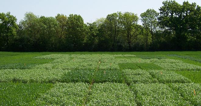 Un cycle de conférences est organisé à l'Esa, à Angers, sur le thème : « Comment augmenter l'agrodiversité dans les systèmes agricoles ? ». Photo : ESA