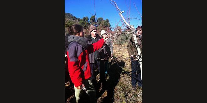 """Léa Arancio s'est lancée dans l'aventure avec KissKissBankBank pour agrandir son verger avec son projet """"aux arbres citoyens"""". Photo:DR"""