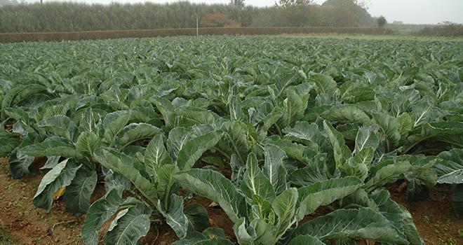 Les surfaces en légumes frais ont augmenté de 12% sur un an, à 4612 hectares, et représentent 4% des surfaces engagées en bio. Photo : D. Bodiou/Pixel image