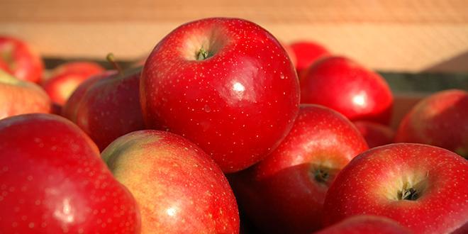 La production française de pommes en 2014/2015 reculerait de 8 % sur un an et par rapport à la moyenne des cinq dernières années.