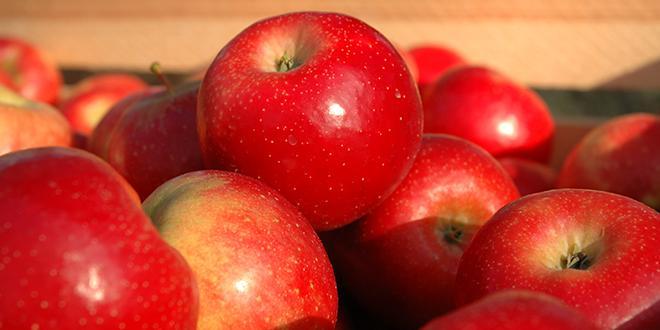 """80% des pommes d'origine France commercialisées par TerreAzur le seront désormais sous le label """"Vergers écoresponsables"""". © C.Poulain / Pixel Image"""