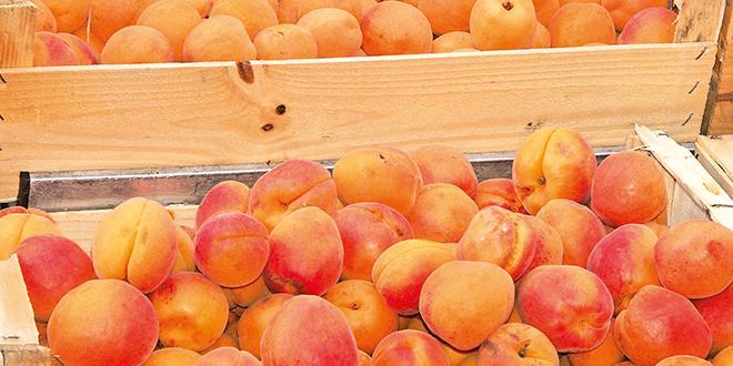 Végépolys et l'ITAB lancent un appel à manifestation d'intérêt sur le contrôle de la qualité sanitaire de leurs fruits et légumes.