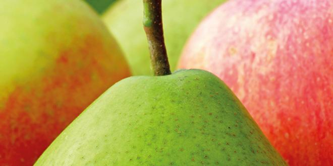 Une production européenne de pommes et poires en légère baisse, des stocks plus bas... Les prix sauront-ils faire oublier la campagne 2014 ?