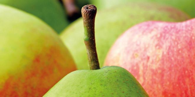 Fin février 2017, le niveau des stocks de pommes est inférieur de 6 % et celui des poires supérieur de 4 % à celui de fin février 2016.