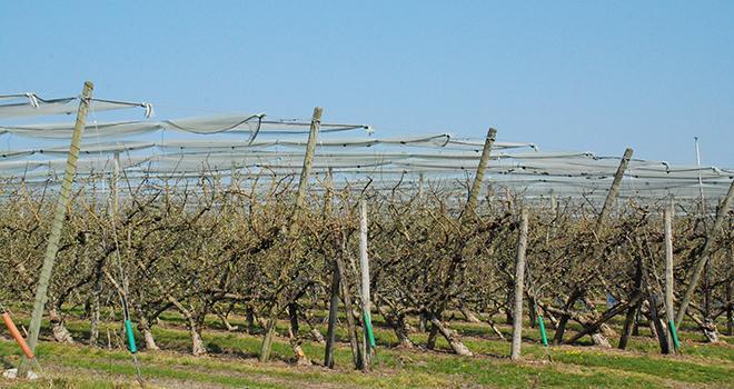 Après un hiver doux et pluvieux, contrairement au précédent, la campagne 2014 a permis à certaines maladies et ravageurs de se développer dans les vergers des Pays de la Loire.