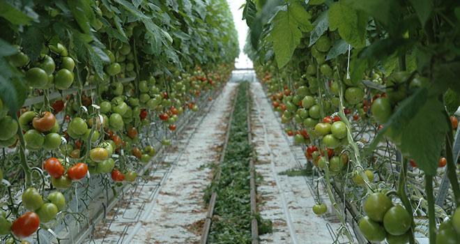 Une Rencontre Écophyto tomate Sud-Est était organisée mercredi 17 octobre 2018. Photo : D. Bodiou/Pixel image