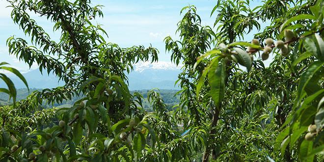 BioWin® est une préconisation technique alliant un produit conventionel et un produit de biocontrôle.