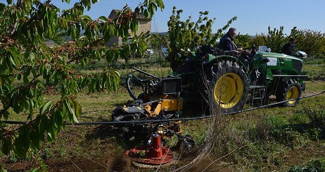 En arboriculture, la zone la plus délicate à gérer sans herbicide est le rang. Photo : C.Even/Pixel6TM