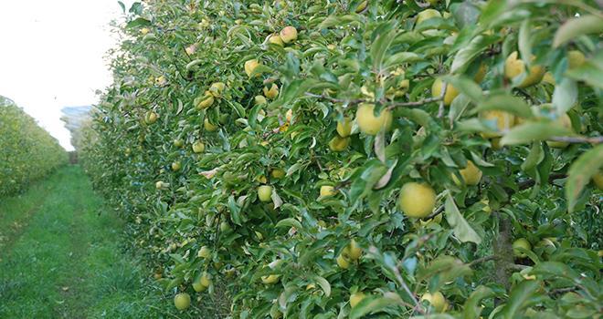 En fruits, la valeur de la production a augmenté de 2,5 % en 2020, la hausse des prix (+13 %) permettant de compenser la nette baisse de la production en volume (- 9,3 %). Photo : O.Lévêque/Pixel6TM