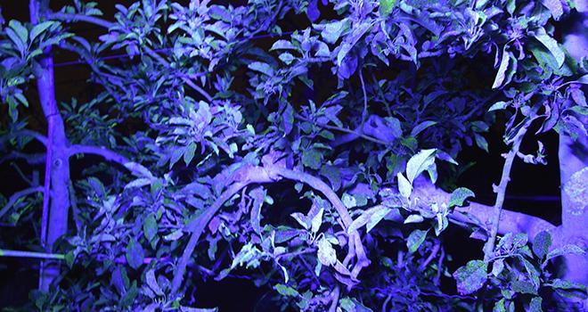La lumière noire permet de révéler la fluorescéine pulvérisée au préalable par le CEHM. Une méthode efficace pour mesurer l'impact des réglages, les différences de matériel et la spécificité des types de buse.