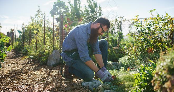 À partir de septembre 2019, l'université de Nantes proposera un nouveau parcours de licence professionnelle spécialisée dans l'agriculture urbaine et périurbaine. Photo : Joshua Resnick/Adobe Stock