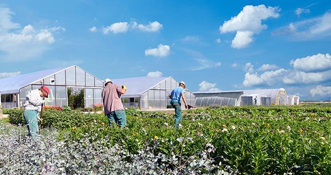 L'aide aux travailleurs saisonniers agricoles accordée depuis le 1er avril 2020 pour le règlement des dépenses de logement est prorogée. Photo : Industrieblick/Adobe stock