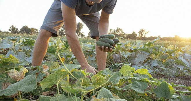L'agriculture biologique serait-elle « la solution mal-aimée » du plan Écophyto comme l'estime la Fnab ? Photo : alexeg84 / Adobe Stock