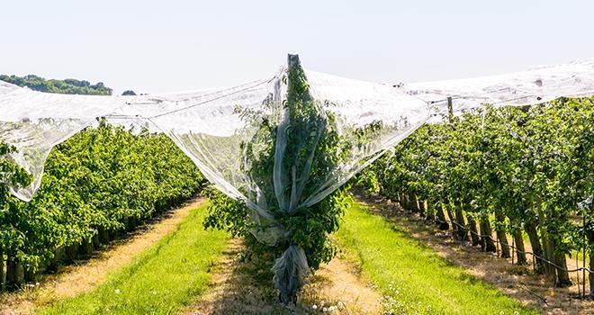Le GIS Fruits vient de publier son rapport sur les sols des vergers. Photo : olrat/Adobe Stock