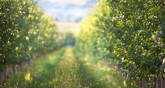 Approvisionnement de fruits en quantité et en qualité, stockage de carbone, biodiversité, apport nutrition… les services rendus par la filière fruits sont nombreux. Photo : fotodiya83/Adobe Stock