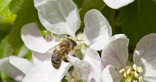 Avec le nouveau plan pollinisateur, le cadre serait étendu à tous les produits phytosanitaires, et plus uniquement aux insecticides. Photo : Fotolia Pictures news