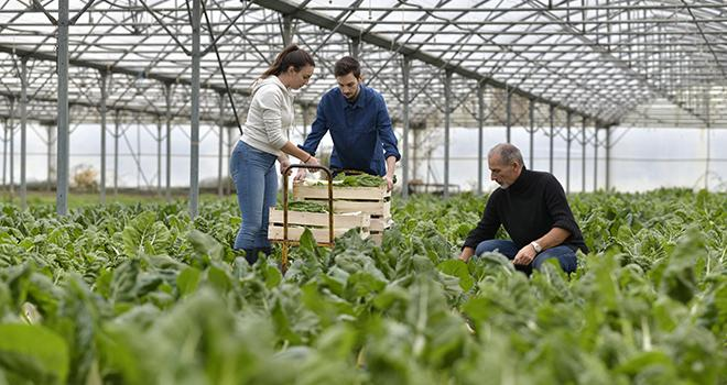 Le nouveau dispositif vient refonder le cadre juridique définissant la relation entre les employeurs et les salariés de la production agricole. Photo goodluz/Adobe Stock