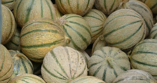 Le groupement de producteurs Force Sud va relancer la marque de melons Rouge-Gorge. CP : SiRo/Adobe Stock