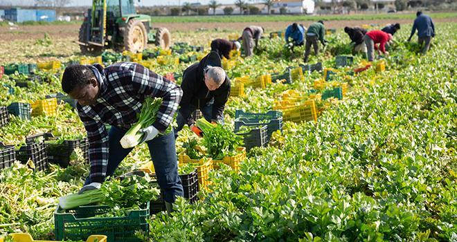 Pour les saisonniers agricoles, l'aide versée par Action Logement est d'un montant de 150 euros par mois, renouvelable dans la limite de 600 euros. Photo : JackF/Adobe stock