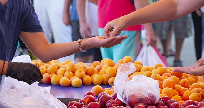 La météo défavorable de fin juin n'a pas stimulé les achats d'abricots. Oleksandr/Adobe Stock