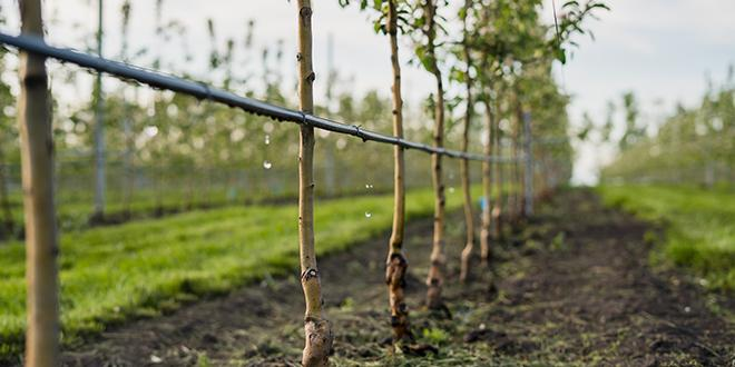 Varenne de l'eau : Interfel demande un soutien aux pouvoirs publics. © Zorgens/ Adobe stock