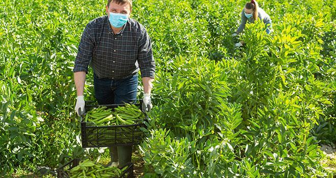 Le tribunal de Tarascon a estimé que les manquements aux règles de sécurité, dans les exploitations agricoles où des cas de Covid-19 ont été constatés, n'étaient pas avérés. Photo : JackF/Adobe stock