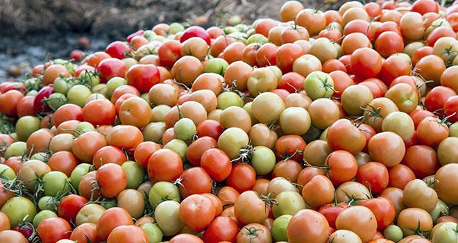 L'appel à candidatures est ouvert à toutes les stations, les producteurs-expéditeurs et les expéditeurs indépendants, situés en France métropolitaine, qui produisent des fruits et légumes destinés à la consommation humaine. Photo : Sonja Birkelbach/adobe stock