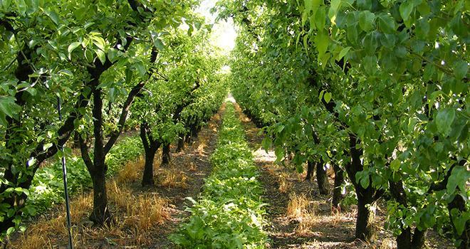 L'enveloppe de 25M€ destinée à soutenir financièrement les agriculteurs suite à la nouvelle réglementation sur les ZNT sera réservée aux filières fruits et légumes et en viticulture. Photo : Franck Vantomme/Adobe Stock