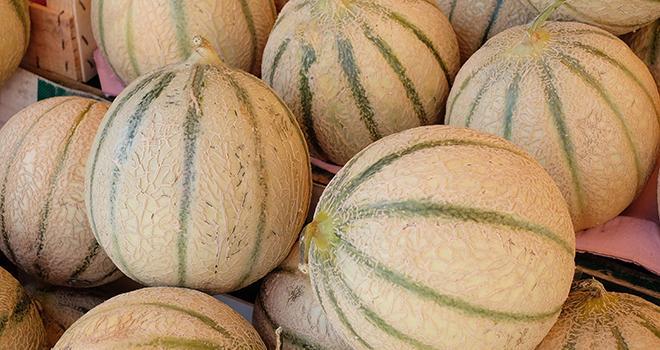 Déjà autorisé sur pommes, poires et fruits à noyau, SmartFresh est désormais utilisable sur melons. Photo : Dominique Vernier/Adobe Stock