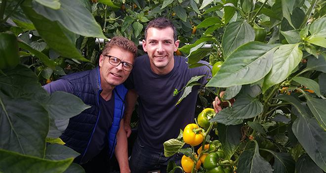 Depuis fin 2018, Adrien Quaak et Kévin Duval, gérants des Serres modernes du Val de Loire (Loiret) et adhérents à l'OP Sopa, cultivent 5 ha de poivrons dans une serre high-tech. Leur production est vendue par Kultive. Photo : DR