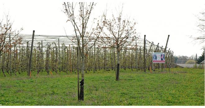 Le Fonds pour l'Arbre ouvre un nouvel appel à projets pour soutenir les actions pour l'arbre et la haie sur les territoires. Photo O.Lévêque/Pixel6TM