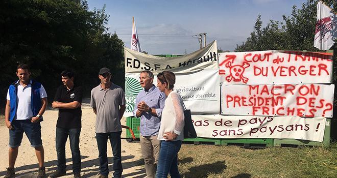 Arrachage d'un verger dans l'Hérault. Photo : ANPP