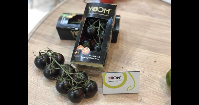 La tomate pourpre Yoom a obtenu le premier prix du concours Fruit Logistica Innovation Award. Photo : Syngenta