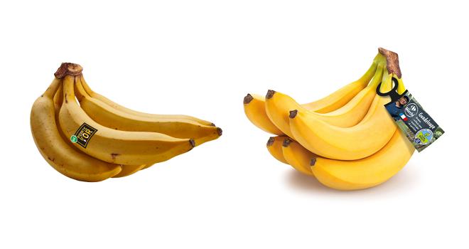 À gauche, la Pointe d'Or, une nouvelle variété résistante à la cercosporiose noire. À droite, la banane Cavendish de la gamme filière qualité Carrefour, garantie sans insecticides et sans traitements chimiques post-récolte. Photos : UGPBAN.
