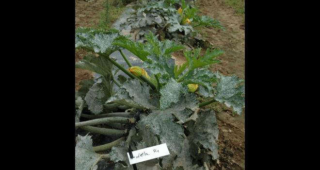 « La station d'expérimentations Pais détient des ressources de semences exceptionnelles et un savoir-faire adapté au terroir nord-breton », selon Julie Boulard, directrice d'IBB. Photo : D. Bodiou/Pixel6TM