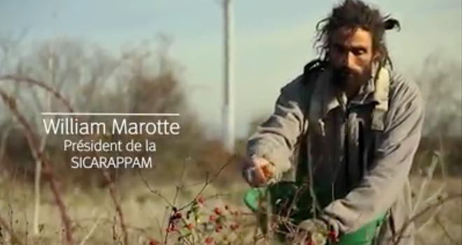 Sicarappam est une coopérative implantée dans le Puy-de-Dôme et créée par un groupe de producteurs de plantes aromatiques et médicinales. Photo : Banque Populaire