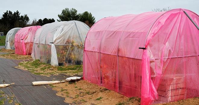 L'entreprise Cascade présente les derniers résultats agronomiques de sa technologie lors de deux prochains webinaires. Photo O.Lévêque/Pixel6TM