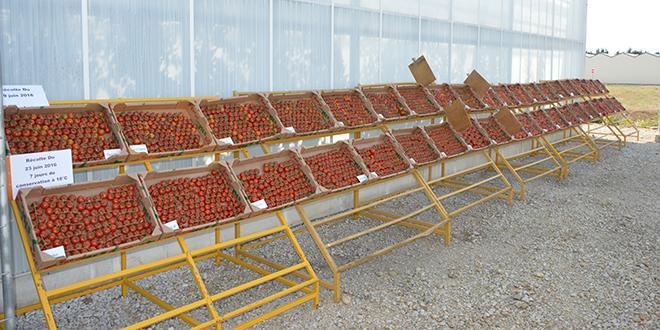 Depuis plusieurs mois, Hervé Piation de la CGAAER travaille sur un audit du réseau national d'expérimentation fruits et légumes.