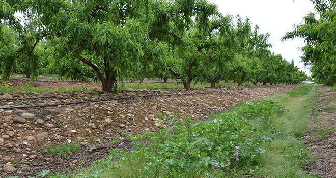 La journée d'échanges sur la valorisation des sols de vergers est ouverte aux arboriculteurs, aux professionnels, aux expérimentateurs, aux chercheurs, aux enseignants, aux pouvoirs publics… Photo : C.Even/Pixel6TM