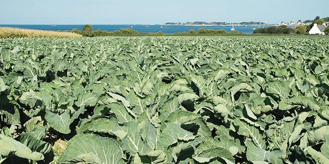 Le site Internet voit le jour dans un contexte de développement inédit de l'agriculture biologique en Bretagne. En production de légumes, avec 71 nouveaux engagements, 2016 est la meilleure année jamais enregistrée.