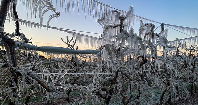 Photo Twitter Nicolas Giraud @nico_duarig, de gel de printemps dans ses vergers.