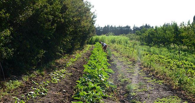 Le projet de ferme pilote de la Durette, située dans la ceinture verte d'Avignon, est en bonne voie d'être pérennisé. Photo : Ferme de la Durette