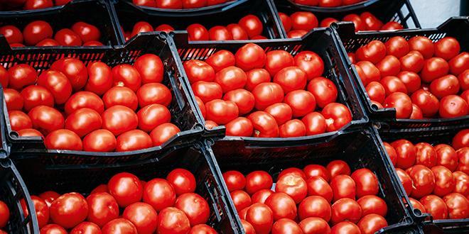 """""""Alors que la production nationale est désormais bien en place, les rayons restent remplis de produits espagnols ou, mieux encore, marocains"""", selon Légumes de France."""