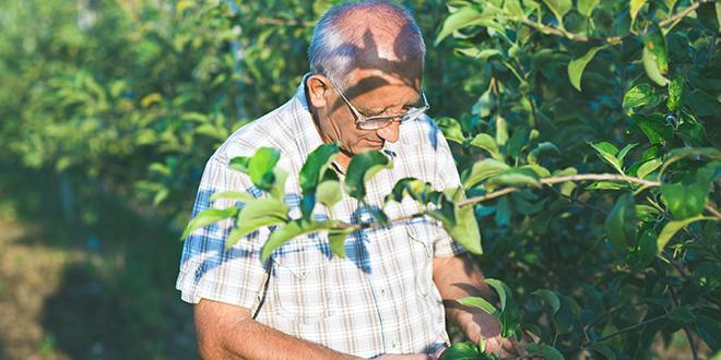 En 2015, un tiers des agriculteurs a gagné moins de 350 € par mois, selon la MSA.