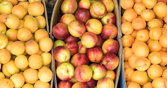 Le service de la statistique du ministère de l'Agriculture s'attend un un fort recul des récoltes en pêches et en abricots. Photo : kbarrowood