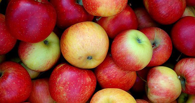 Sur les sept premiers mois de la campagne 2017-2018, les exportations de pommes françaises repartent à la hausse. Photo : Inna Paladii