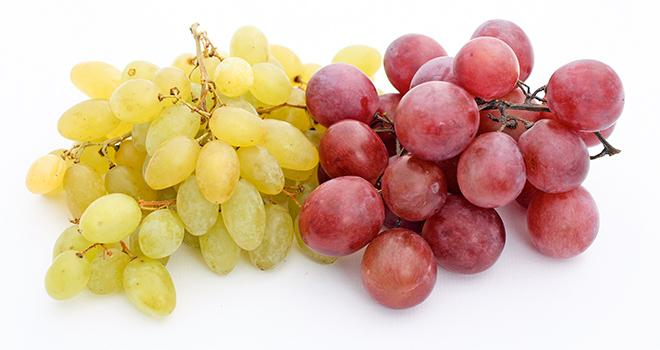 Lancée en 2008, l'UMT Géno-Vigne regroupant l'IFV, l'Inra et Montpellier Supagro, travaille sur la création variétale en raisin de table.