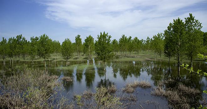 Malgré les pluies diluviennes qui se sont abattues récemment sur la région, les vergers languedociens ont été relativement épargnés.