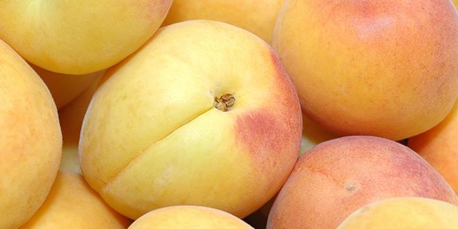 En Angleterre, les clients de Waitrose ont et jusqu'au 19 août pour découvrir les abricots du Languedoc-Roussillon.