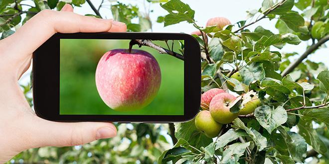 L'agenda technique en arboriculture fruitière a été riche cet été, et il continue de plus belle en cette rentrée. Le point sur les rendez-vous technique des quatre prochains mois.